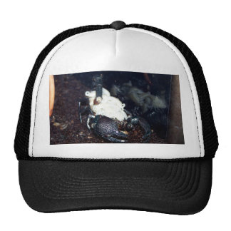 Scorpion Mother and Trucker Hat