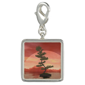 Scotch pine bonsai tree - 3D render Photo Charm