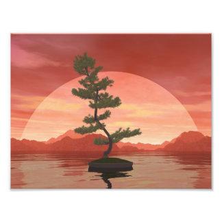 Scotch pine bonsai tree - 3D render Photo Print