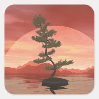 Scotch pine bonsai tree - 3D render Square Sticker