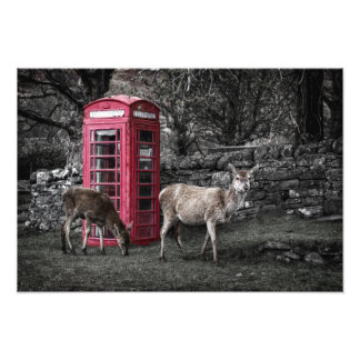 Scotland Deers @ Red Telephone Booth Photo