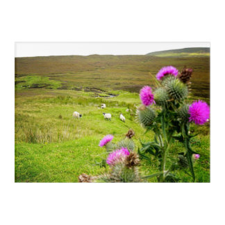Scotland Highlands Thistle Landscape Acrylic Panel Acrylic Wall Art