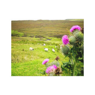 Scotland Highlands Thistle Landscape Canvas