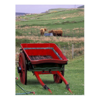 Scotland, Isle of Skye, Kilmuir. Farm animals Postcard
