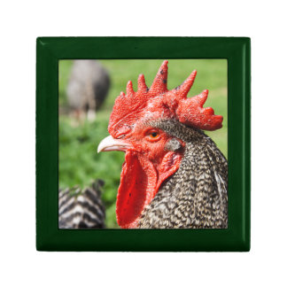 Scots Grey Rooster Chicken Photograph Trinket Boxes