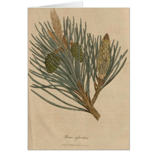 Scots Pine Card