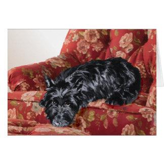 Scottie dans une grande chaise rouge cartes de vœux