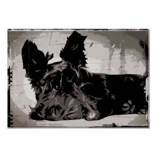 Scottie dog resting with urban style background poster