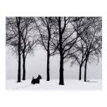 Scottie in Snowy Woods Postcards