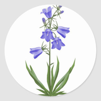 scottish blue bells - customizable round sticker