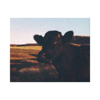 scottish cow portrait canvas print