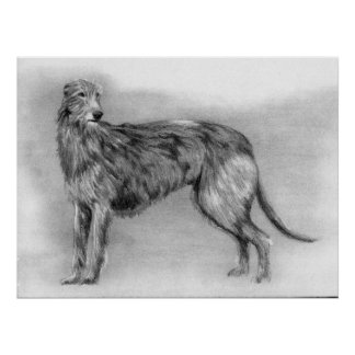 Scottish Deerhound Dog Portrait Poster