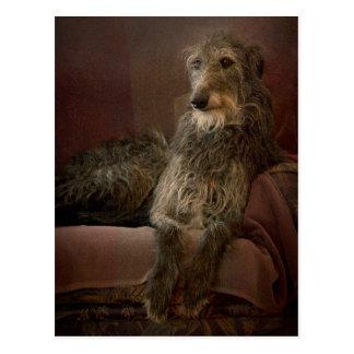 Scottish deerhound one has sofa postcard