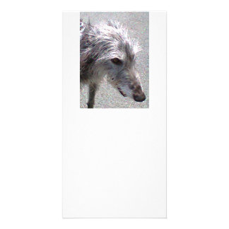 scottish Deerhound.png Photo Card Template