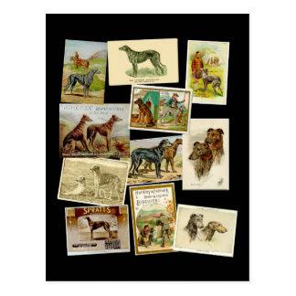 Scottish deerhound: vintage postcard