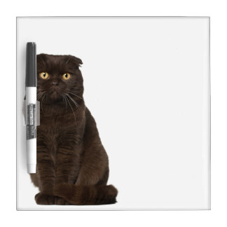 Scottish Fold (18 months old) sitting Dry Erase Board