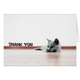 "Scottish Fold Cat Kitten Super Cute ""Thank You"" Card"
