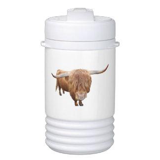 Scottish highland cattle drinks cooler