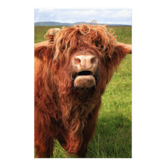 Scottish Highland Cattle - Scotland Customized Stationery