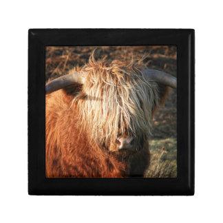 Scottish Highland Cow - Scotland Gift Box