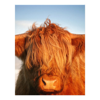 Scottish Highland Cow - Scotland Letterhead Design