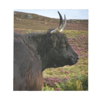 Scottish Highland Cow - Scotland Notepad