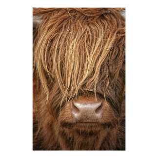 Scottish Highland Cow - Scotland Stationery