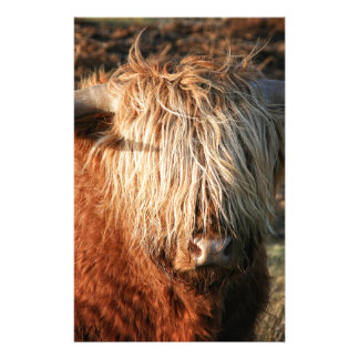 Scottish Highland Cow - Scotland Stationery Design