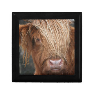Scottish Highland Cows - Scotland Gift Box