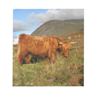 Scottish Highland Cows - Scotland Notepad