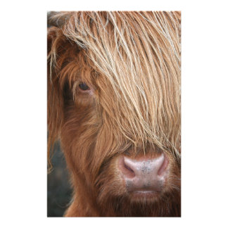 Scottish Highland Cows - Scotland Stationery Design
