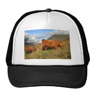 Scottish Highland Cows - Scotland Trucker Hat