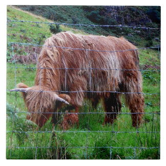 """""""Scottish Highland Long-Haired Cow"""" Tiles"""