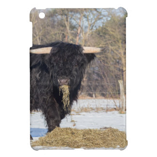 Scottish highlander bull eating hay in winter snow case for the iPad mini