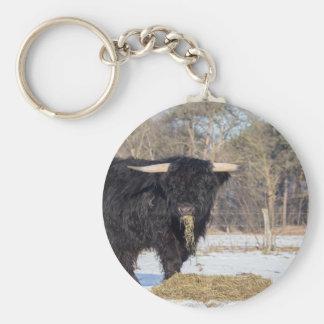 Scottish highlander bull eating hay in winter snow keychain