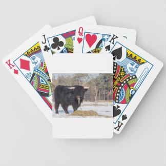 Scottish highlander bull eating hay in winter snow poker deck