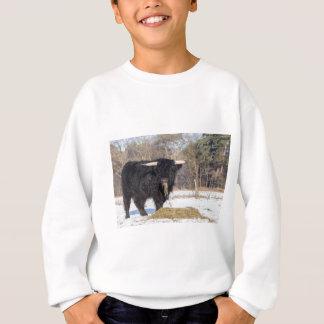 Scottish highlander bull eating hay in winter snow sweatshirt
