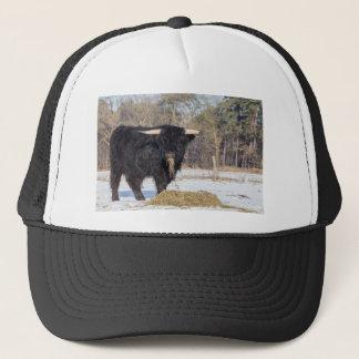 Scottish highlander bull eating hay in winter snow trucker hat