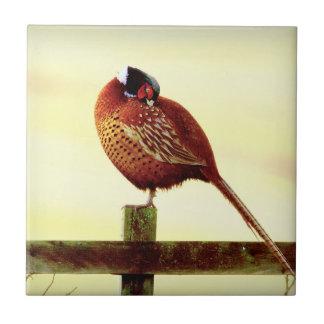 Scottish Pheasant Preening Tile