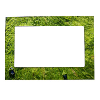 Scottish Seaweed Magnetic Frame