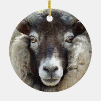 Scottish Sheep Close Up Round Ceramic Ornament