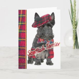 Scottish kilt cards greeting cards more zazzle ca scottish terrier in kilt greeting cards m4hsunfo