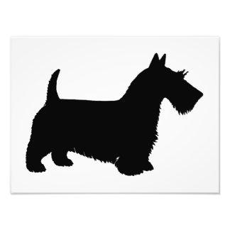 scottish terrier photo art