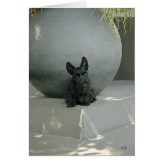 Scottish Terrier Pup with Orb Card