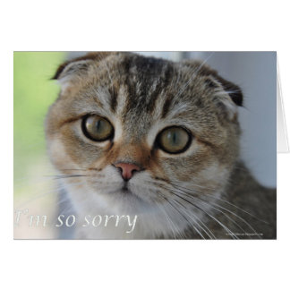 Scottish the cat noodles is sorry for your loss greeting card