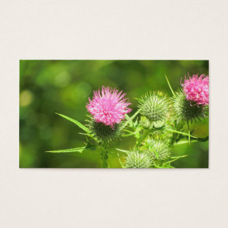 Scottish Thistle Business Card