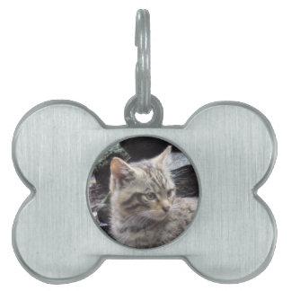 Scottish Wildcat Pet ID Tags