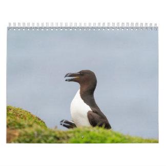 Scottish Wildlife, Wild and free Wall Calendar