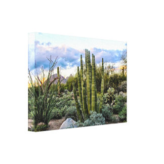 Scottsdale Succulent Sunset Canvas Print