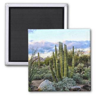 Scottsdale Succulent Sunset ( no text ) Magnet